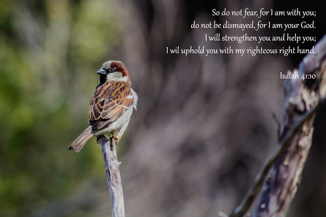 He cares for the sparrows. How much more for you?